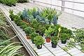 Centre horticole de la Ville de Paris a Rungis 2011 091.jpg