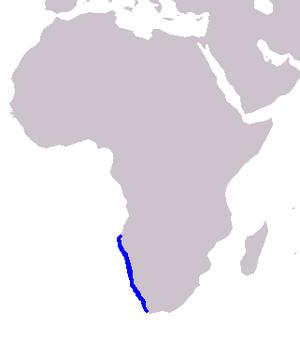 Heaviside's dolphin - Image: Cetacea range map Heaviside's Dolphin
