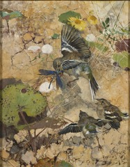Chaffinches and Dragonflies. Five studies in one frame, NM 2223-2227