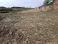 Chenopodium urbicum sl59.jpg