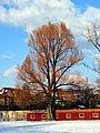 Chinagarten - Blatterwiese 2012-02-04 15-58-19 (SX230).JPG