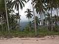 Coconut palm trees on the beach of Sabang, Palawan, Philippines.jpg