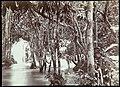 Collectie Nationaal Museum van Wereldculturen TM-60062260 Drie jongens tussen de bomen bij een waterval Jamaica A. Duperly & Sons (Fotostudio).jpg