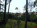 Condominios e Mata vista pela Estrada - panoramio.jpg
