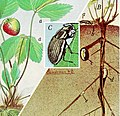 Controlling white-fringed beetles (1972) (20698700701).jpg
