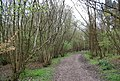Coppiced trees by the footpath, The Slips - geograph.org.uk - 1260413.jpg