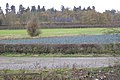 Corner of a field of leeks west of the B4115 - geograph.org.uk - 1572199.jpg