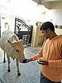 Cow feed.jpg