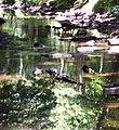 Crabtree Creek Umstead SP NC 5696 (4780638790) (2).jpg