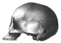 Crania americana or, A comparative view of the skulls of various aboriginal nations of North and South America - to which is prefixed an essay on the varities of the human species, plate 70 number 1 (IA b24918726).png