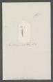 Criseis gadus - - Print - Iconographia Zoologica - Special Collections University of Amsterdam - UBAINV0274 080 07 0028.tif