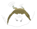 Crocodylus intermedius hunting technique - 2.png