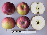 Cross section of Redwell, National Fruit Collection (acc. 1951-065).jpg