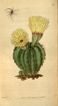 Curtis's Botanical Magazine, Plate 3107 (Volume 58, 1831).png