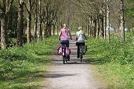 Deux cyclistes sur un chemin bordé d'arbres