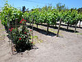 DSC28047, Chateau Julien Winery, Carmel, California, USA (4654145578).jpg
