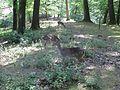 Damwild im Wildgehege Witthausbusch.jpg