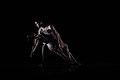 Dance Concert 2007- Gotta Dance (16022270529).jpg