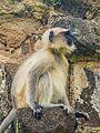 Daulatabad, Aurangabad - panoramio (24).jpg