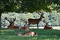 Deer - Woburn Abbey Deer Park (36569370055).jpg