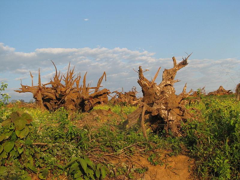 Deforestation around Pakke Tiger Reserve, India.JPG