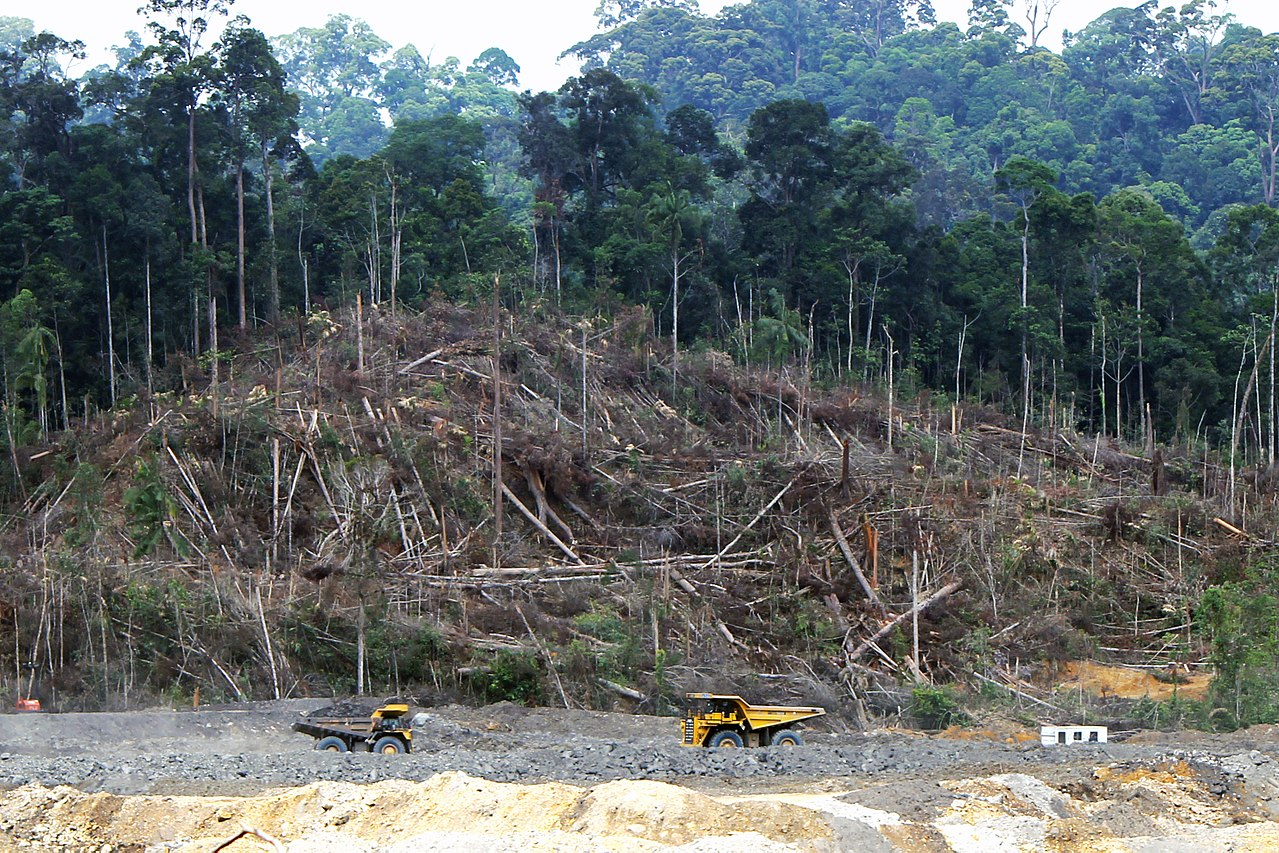 Trees cleared for a coal mine, illustrating deforestation due to economic interests