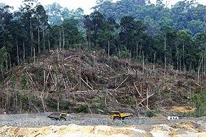 deforestation in borneo wikipedia