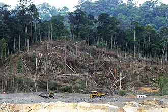 Deforestation in Borneo - Trees being felled in Kalimantan, the Indonesian part of Borneo, in 2013, to make way for a new coal mining project