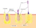 Descarga de nematocisto.png