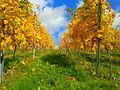 Detailaufnahme Reben im Herbst.jpg