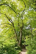 Detmold - 2014-05-05 - NSG LIP-015 - ND 5.11.1 (3).jpg