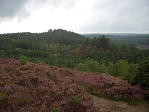 Devil's Jumps, Churt - The Devil's Jumps, from the summit of the easternmost hill
