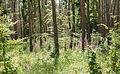 Digitalis purpurea - Purple Foxglove - Roter Fingerhut - Hesse - Germany - 20.jpg
