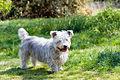 Dog-1362586861Ge5.jpg