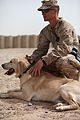 Dog handlers train canines, save Marine lives in Afghanistan 120324-M-UP355-001.jpg