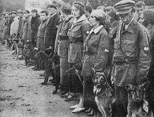 Anti-tank dog - Soviet military dog training school, 1931