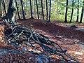 Doline in Steilstufe des Muschelkalks zwischen Bad Berka und Saalborn 09.jpg
