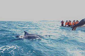 Dolphin tour in Zanzibar