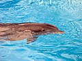 Dolphins (7981061018).jpg