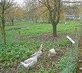 Domestic Fowl Trust - geograph.org.uk - 1140778.jpg