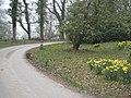 Driveway at Arlington Court - geograph.org.uk - 1239620.jpg
