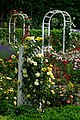 Duftende Schönheit, der Rosengarten im Kurpark Bad Mergentheim. 01.jpg