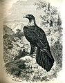 Eagle (16152460119).jpg