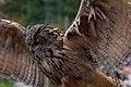 Eagle Owl Wings Spread (7913350190).jpg