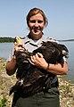 Eagles thrive at Clinton Lake (7211646316).jpg