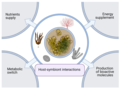 Ecological relevance of cyanobacteria in symbioses.webp