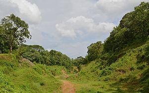 Edamalayar - A view of Edamalayar Forest