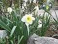 Eh....La Primavera, Fiori, Profumi, Colori - panoramio.jpg