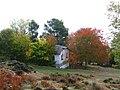El cerezo de la Escuela - panoramio.jpg