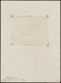 Elainia glabra - 1868 - Print - Iconographia Zoologica - Special Collections University of Amsterdam - UBA01 IZ16500299.tif